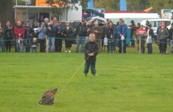 Falconry UK Event Displays