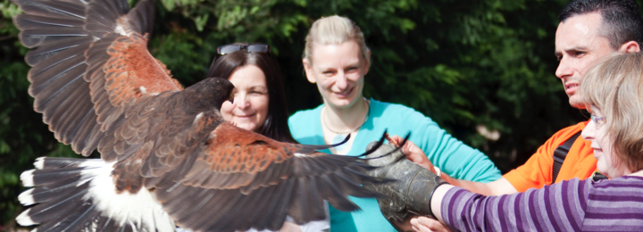Falconry UK Static & Flying Displays
