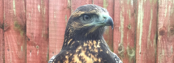 Falconry UK - Book Us For An Event