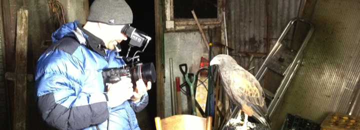 Falconry UK TV & Film Bookings